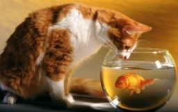 cat_and_fish-t1.jpg