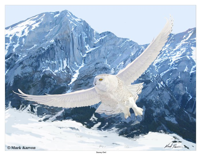 Snowy Owl - painting